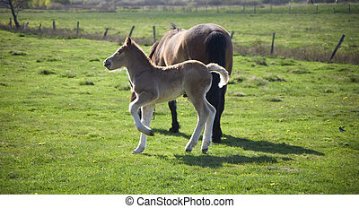 mamre whit youth colt on green grass
