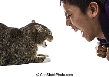 Angry gray tabby cat snarls at man on white background