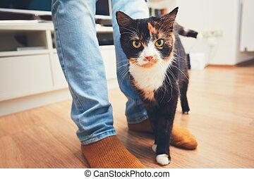 Man and cute cat