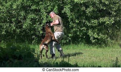 Man and dog are playing with a training stick.