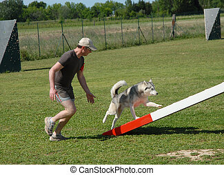 man and his husky in agility