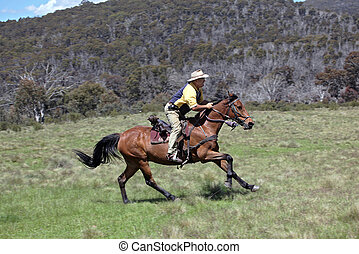 man and horse - horse ridding in the green outback