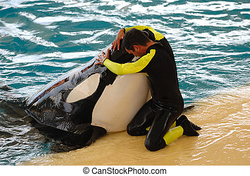 Man is hugging a very big killer whale