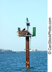 Man and Nature - Osprey making nest on navigation marker in ...