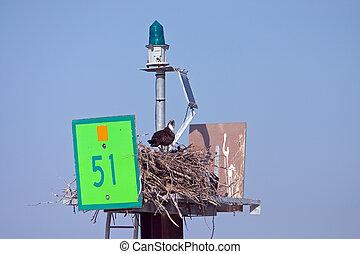 Man and Nature3 - Osprey making nest on navigation marker in...