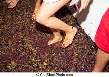 man and woman crushes the grapes with their feet bucket to ...