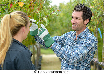 Man and woman inspecting fruit tree
