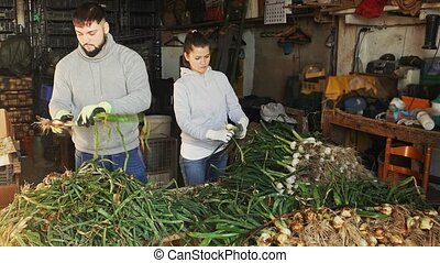 Man and woman checking and clean green onions in vegetable store
