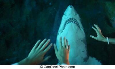 Man and woman tease a shark in an aquarium