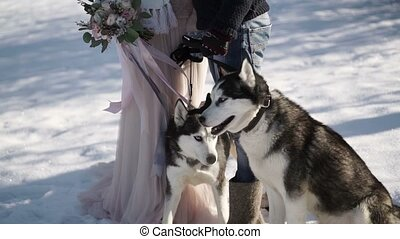 Man and woman with two husky dogs