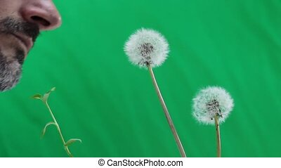 man blowing dandelion
