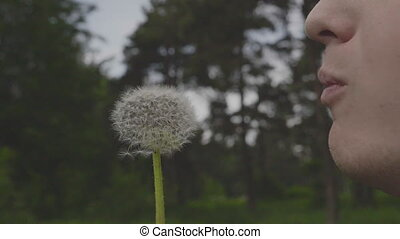 Man blowing on a fluffy dandelion, slow motion