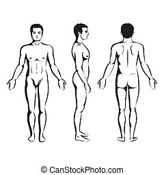 man body anatomy, front, back and side standing vector human...