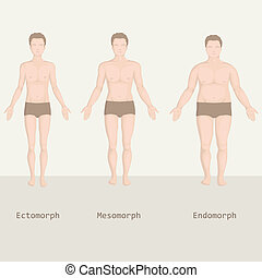 man body types,