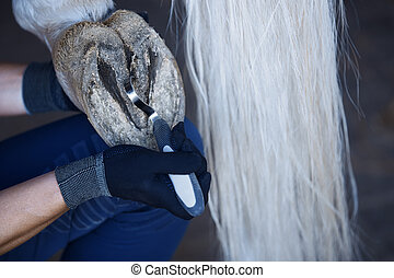 Man cleaning horse hoof