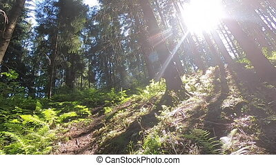 Man climbs along slope on mountain. POV. Sun shines through trees on hillside. Walking on dirt mountain trail while hiking in mountains. Concept travel activities. Nature backdrop, natural background