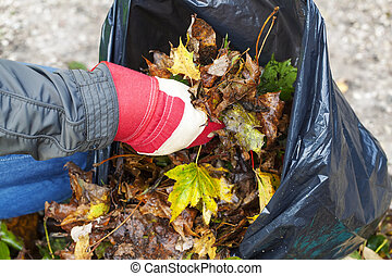 Man collects leaves in the fall
