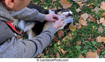 Man combing his dog