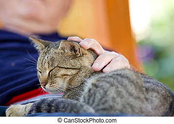 Man cuddling cat - Tabby cat enjoying cuddling in old man's...