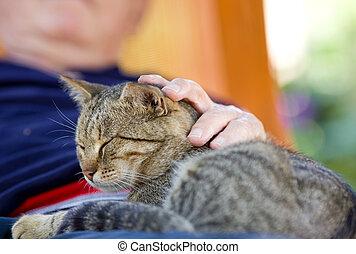 Man cuddling cat - Tabby cat enjoying cuddling in old man's...