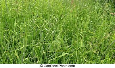 man cut grass trimmer