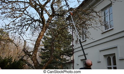 man cut trim tree branch - Man cut trim apple fruit tree...