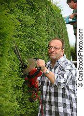 Man cuts hedges in the garden
