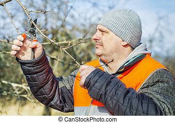 Man cuts the branches in the garden