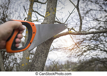 Man cuts tree branches sawing. Spring training garden plot...