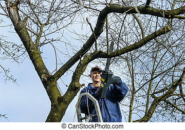 Man cutting a branch of withered tree.