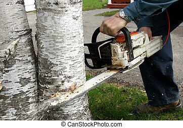 Man cutting down trees - Man cutting down two overgrown...