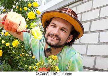 Man cutting the rose bush in the garden