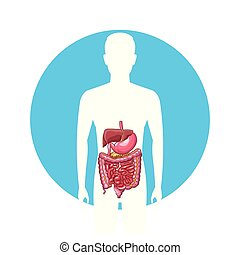 man digestive system silhouette vector illustration graphic design