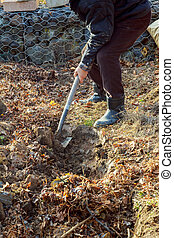 Man digging with spade in autumn or spring garden,
