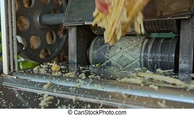 Man Draws Cane-sugar Stem out of Juice Making Machine - man...