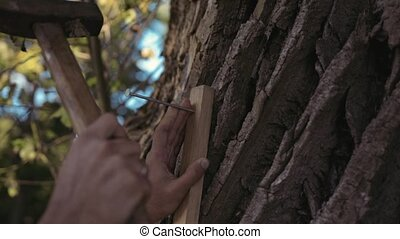 Man driving nails with hammer into old tree close-up -...