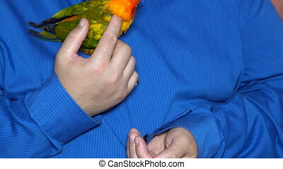 Man enjoy playing with parrot in house enjoy holding...