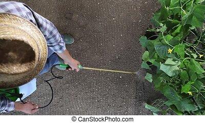 man farmer working in vegetable garden, pesticide sprays on ...