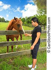 Man feeding a horse in a paddock - A man feeding a horse in...