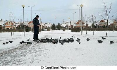 Man feeding big flock of pigeons in park in winter