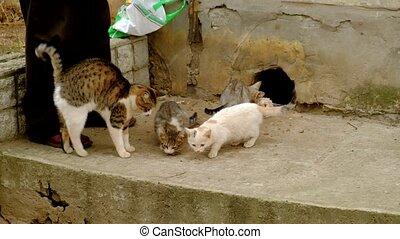 Man feeds homeless cats. Hard life of disadvantaged animals...