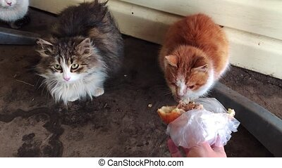 man feeds homeless cats. Homeless kittens sleeping on a stone background. the problem of cat stray animals pet lifestyle