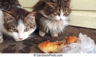 man feeds homeless cats. Homeless kittens sleeping on a...