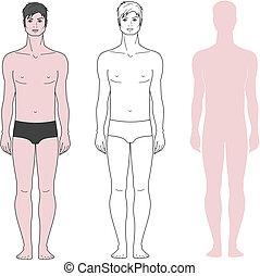 Man figure - Vector illustration of male figure