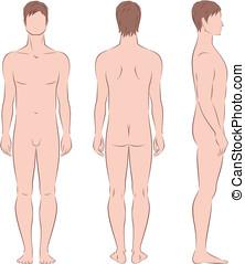 Man figure - Vector illustration of male figure. Front,...