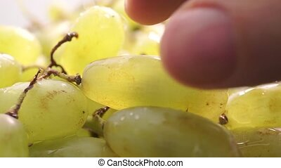 Man fingers ripping off green grape, extreme close up video...