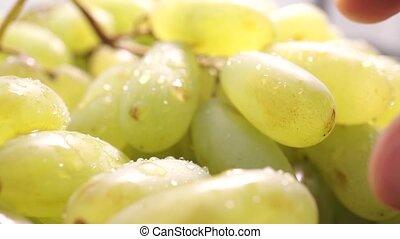 Man fingers ripping off green grape, macro video
