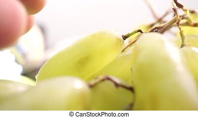 Man fingers ripping off wet white grape, macro video
