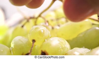 Man fingers ripping off white grape, macro video
