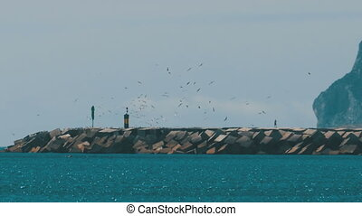 Man goes to the Lighthouse, around it Flies a Flock of Seagulls on the Beach. Gibraltar. Spain.